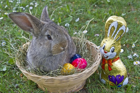 ittle bunny sitting in a basket with colorful easter eggs photo