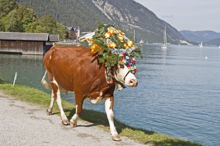 Departure of the cows to valley