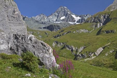 angustifolium: In Koednitz valley - view to Grossglockner