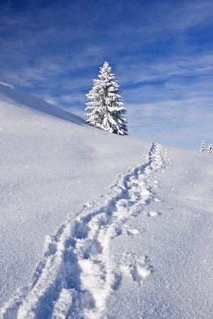 deep powder snow: footprint uphill through virgin powder snow