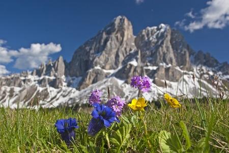 Mountain flowers in the Dolomites Reklamní fotografie