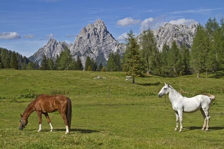 Horses on the summit of the Sella di Razzo photo