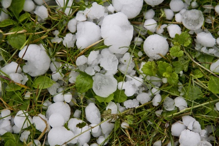 hail: ice pellets un a meadow