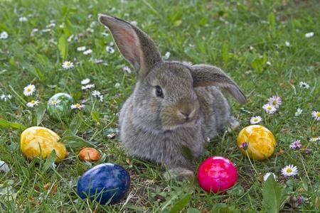bunny ears: Easter Bunny