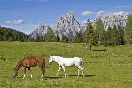 sella: Pferde in der Sommerfrische auf der Passh�he des Sella di Razzo