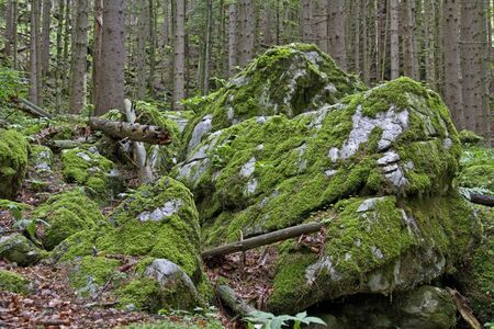 rockslide: Mossy rocks put us into a magical forest Feeling Stock Photo
