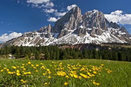 dolomites: Peitlerkofel  and flower meadow Stock Photo