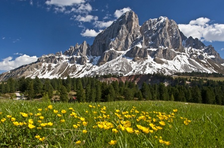 Peitlerkofel  and flower meadow Standard-Bild