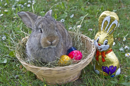 Bunny and Eastereggs photo
