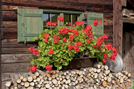 Rich profusion of flowers in front of the window of the old farm
