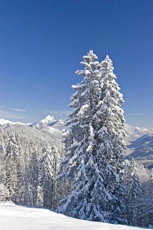 deep powder snow: winter landscape Stock Photo