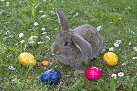 Hase: Bunny and Eastereggs Stock Photo