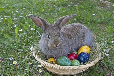 Little bunny sitting in a basket with colorful Easter eggs photo