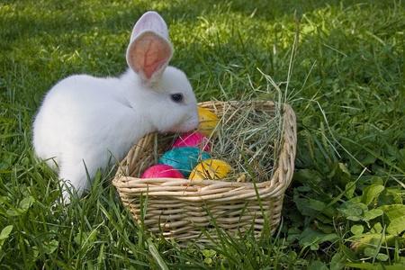 Blanc lapin de Pâques Banque d'images - 12307317