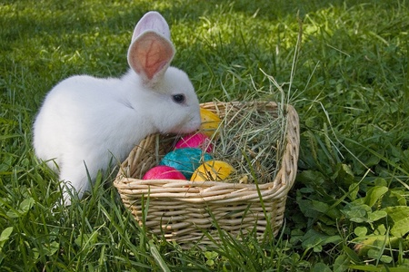 easter bunny: White Easter bunny Stock Photo