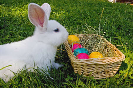 White Easter bunny photo