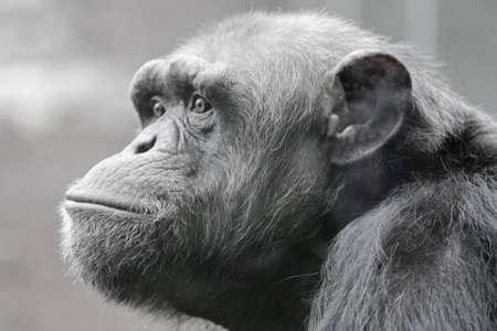 humanly: Sadly monkey