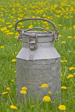 commonplace: Old milk jug standing in blooming meadow
