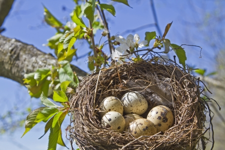 Bird nest with eggs Stock Photo