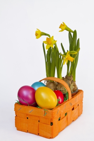 Rectangular  basket with colorful Easter eggs and dwarf daffodils photo