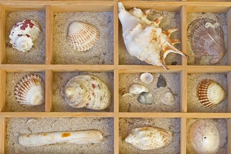 molluscs: background - many shells in typecase