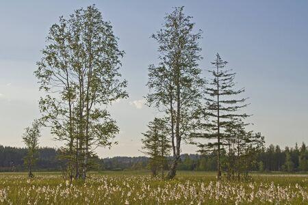 moorland: moorland in Upper Bavaria Stock Photo