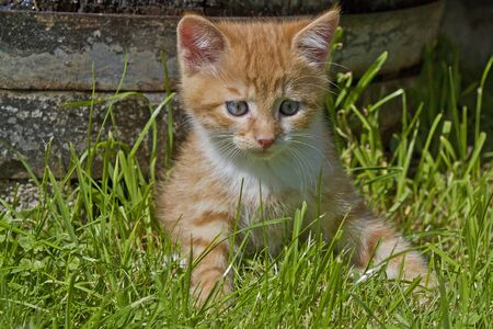 curren: kitten on meadow