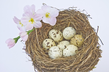 brood: Bird nest with eggs Stock Photo