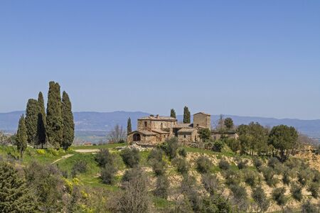 montepulciano: Farm with olive and cypress plantation in Montepulciano Stock Photo