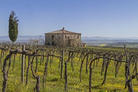 montepulciano: Farm with wine plantation in Montepulciano Stock Photo