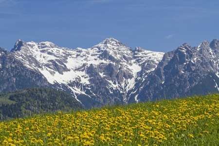 dandelion snow: View to flowering dandelion meadow with mountains Loferer Stock Photo