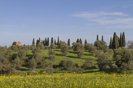 orcia: Tuscan landscape in the Val di Orcia