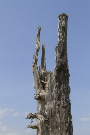 mortality: Abstract work of art by nature - dead tree stump in the Karwendel mountains