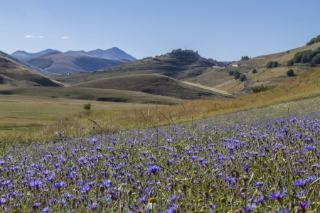 Flower Meadow in Sibillini mountains