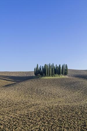 idyll: Tuscan idyll - Cypress Group in Crete
