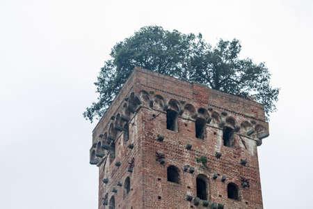 lucca: torre guingi in Lucca