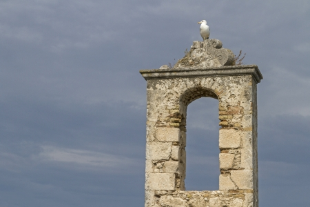 foggia: Seagull on the tower of the old castle in Peschici
