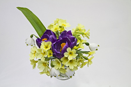 spring flowers on white background photo