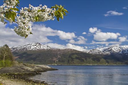 hardanger: Fruit Blossom by the Hardanger Fjord in Norway