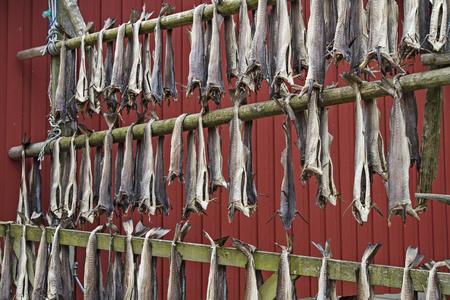 stockfish: Stockfish is hung on racks for preservation