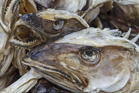 severed: The severed heads of cod preserved by drying in the cold air of Lofoten Stock Photo