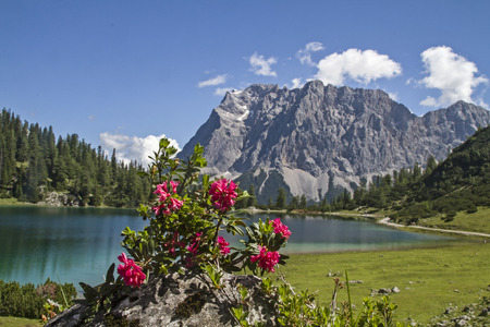 Seebensee lake and alpine flowers in front of Zugspitze  in Tyrol