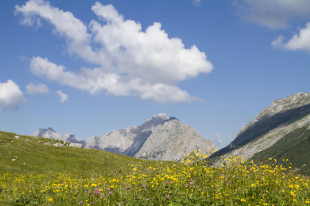 plateau of flowers: Flowers meadow on a plateau in Tyrol