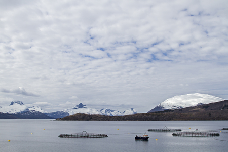 The Norwegian aquaculture is often based on net pens in the open ocean or in bays and serves mainly the breeding of salmon photo