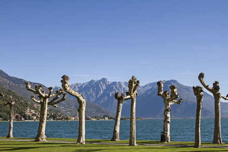 lake como: Platanen aan de oever van het Comomeer Stockfoto