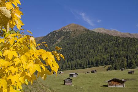 tal: Herbst auf den Tschey Wiesen iim Pfundser Tal in Tirol