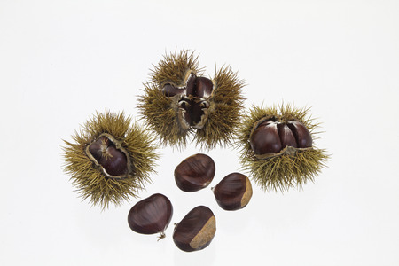 maroni: The sweet chestnut is a delicious and popular fruit tree