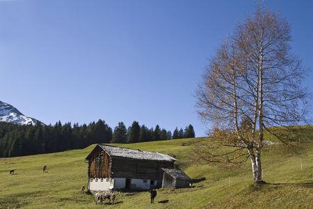 prato montagna: Legnaia su un prato di montagna in valle di Medel in Svizzera