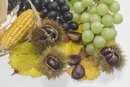 maroni: Various autumn fruits with sweet chestnuts arranged on white background Stock Photo
