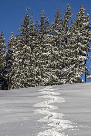 deep powder snow: The traces of a single skier in pristine deep snow